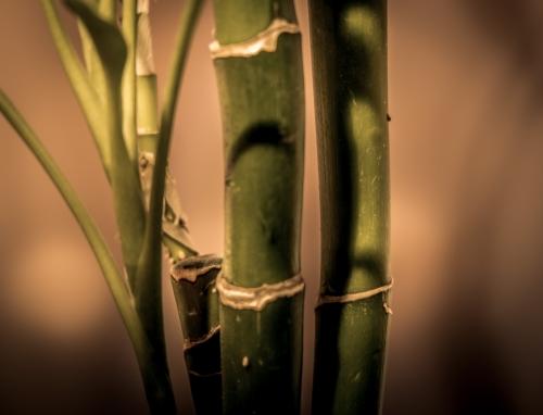 VIERGE:  BAMBOU: Un porte-bonheur qui les apaise tout en leur portant chance. Lucky bambou est l'objet qu'il leur faut.