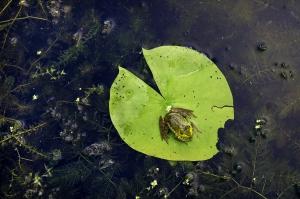 Amphibien - Héritage Saint-Bernard