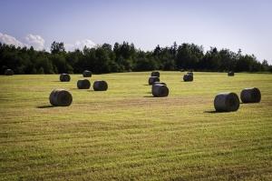 Zone rurale de la Nouvelle-Écosse
