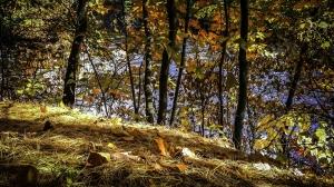 Forêt la Plaine - Saint-Majorique-de-Grantham