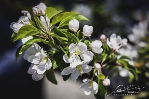 Photos du mois de mai